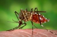 Indien Denguefieber